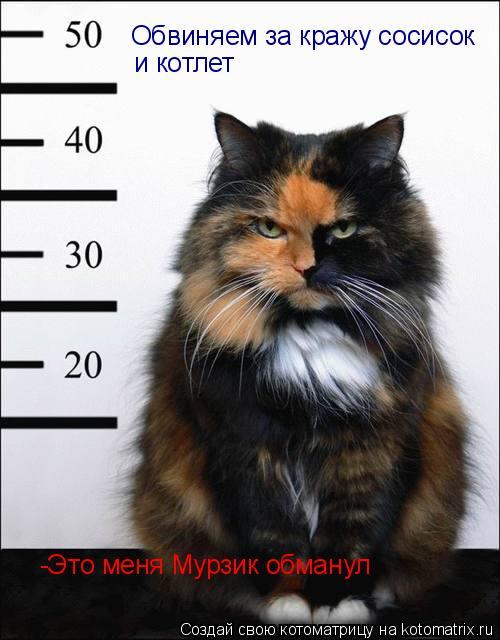 Котоматрица: Обвиняем за кражу сосисок и котлет -Это меня Мурзик обманул