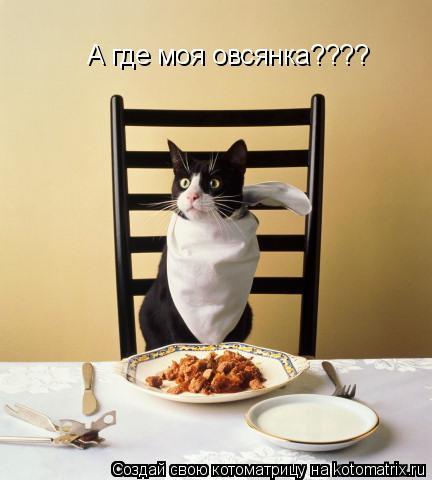 Котоматрица: А где моя овсянка????