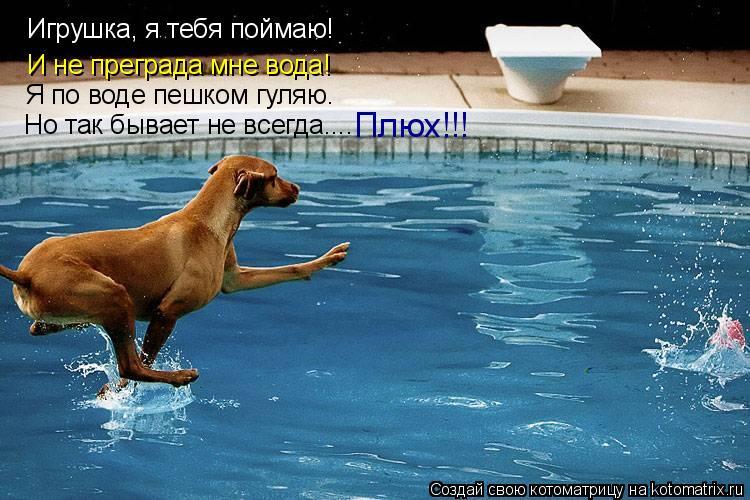 Котоматрица: Игрушка, я тебя поймаю! Я по воде пешком гуляю. И не преграда мне вода! Но так бывает не всегда.... Плюх!!!