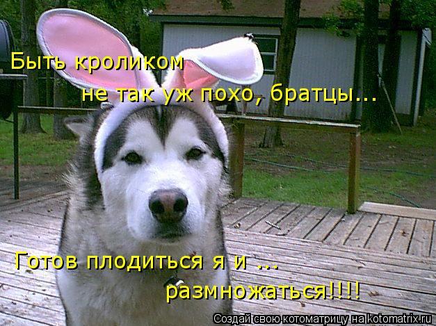 Котоматрица: Быть кроликом  не так уж похо, братцы... Готов плодиться я и ... размножаться!!!!