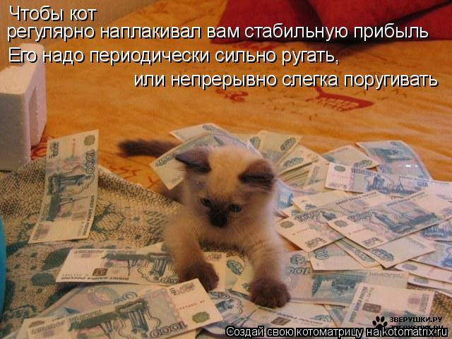 Котоматрица: Чтобы кот  регулярно наплакивал вам стабильную прибыль Его надо периодически сильно ругать, или непрерывно слегка поругивать
