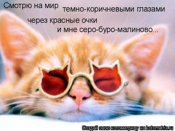 Котоматрица: Смотрю на мир темно-коричневыми глазами через красные очки и мне серо-буро-малиново...