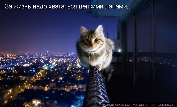 Котоматрица: За жизнь надо хвататься цепкими лапами...