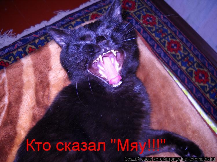 """Котоматрица: Кто сказал """"Мяу!!!"""""""