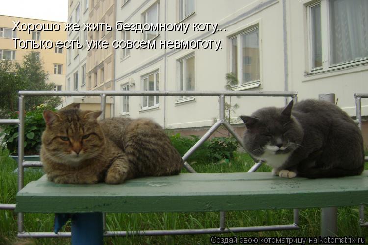 Котоматрица: Хорошо же жить бездомному коту... Только есть уже совсем невмоготу.