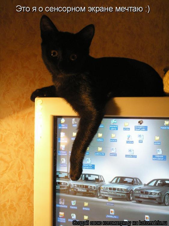 Котоматрица: Это я о сенсорном экране мечтаю :)