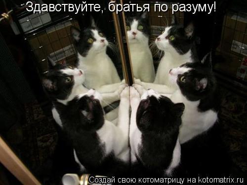 Котоматрица: Здавствуйте, братья по разуму!