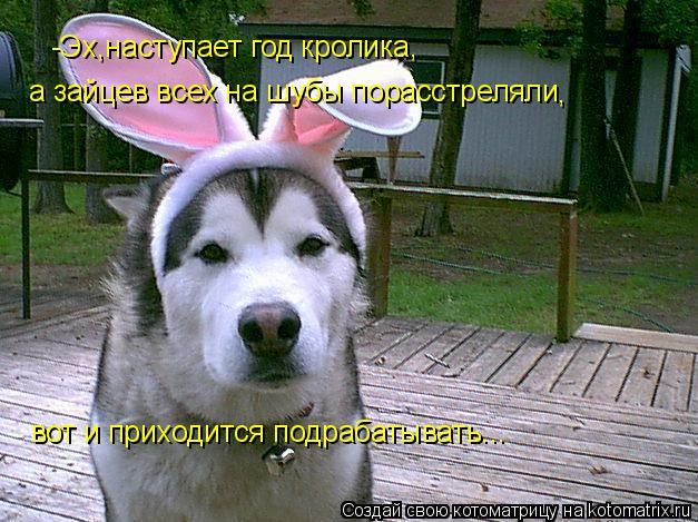 Котоматрица: -Эх,наступает год кролика, а зайцев всех на шубы порасстреляли , вот и приходится подрабатывать...