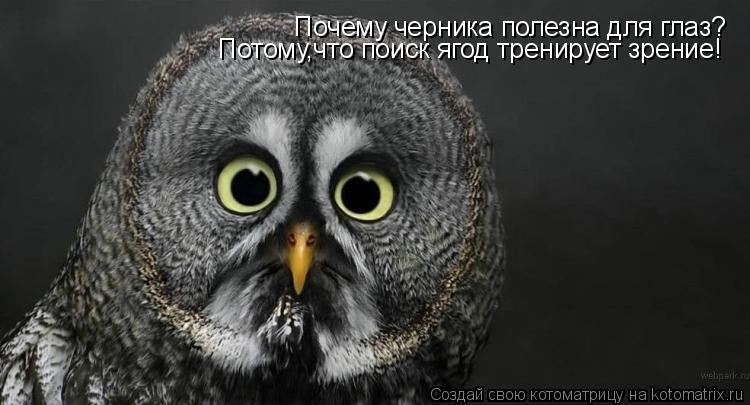 Котоматрица: Почему черника полезна для глаз? Потому,что поиск ягод тренирует зрение!