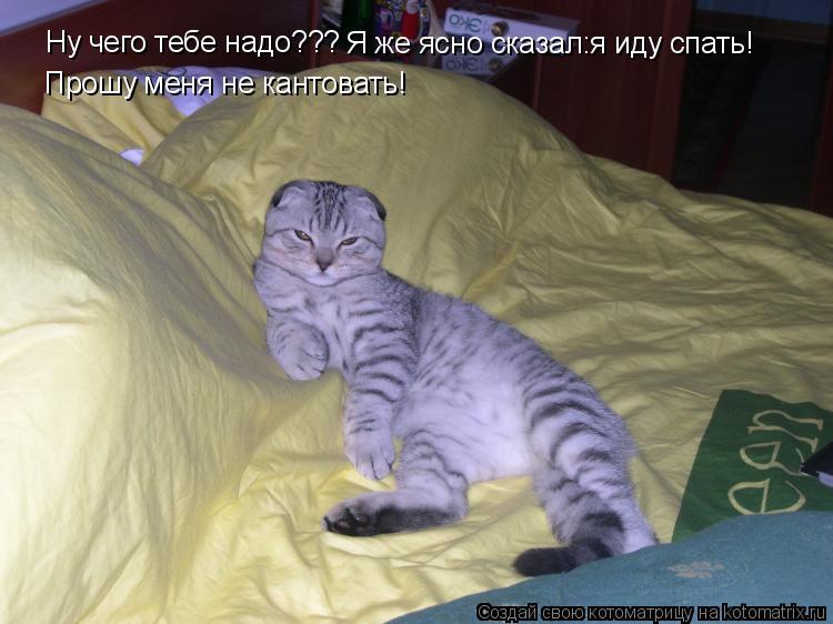 Котоматрица: Ну чего тебе надо??? Я же ясно сказал:я иду спать! Прошу меня не кантовать!