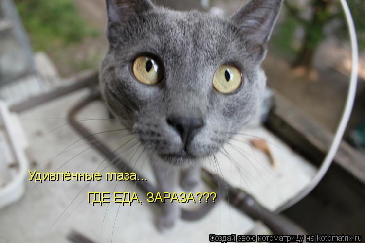 Котоматрица: Удивлённые глаза... ГДЕ ЕДА, ЗАРАЗА???