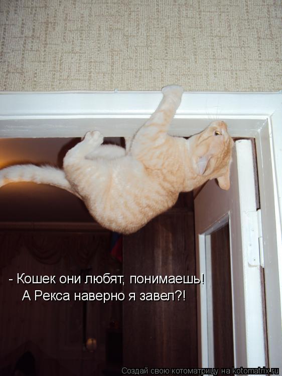 Котоматрица: - Кошек они любят, понимаешь! А Рекса наверно я завел?!