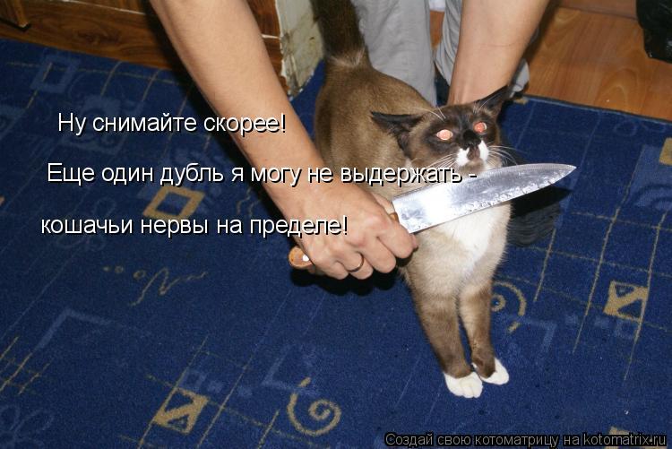 Котоматрица: Ну снимайте скорее! Еще один дубль я могу не выдержать - кошачьи нервы на пределе!