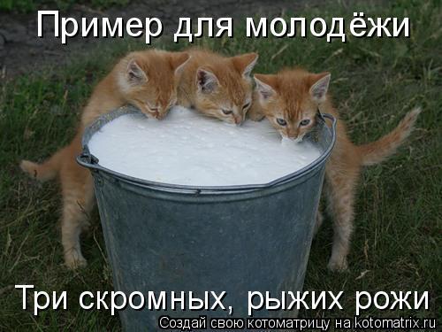 Котоматрица: Пример для молодёжи Три скромных, рыжих рожи