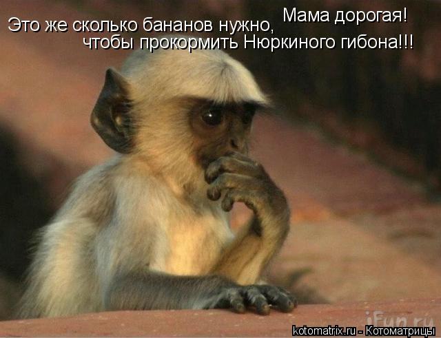 Котоматрица: Мама дорогая! Это же сколько бананов нужно, чтобы прокормить Нюркиного гибона!!!