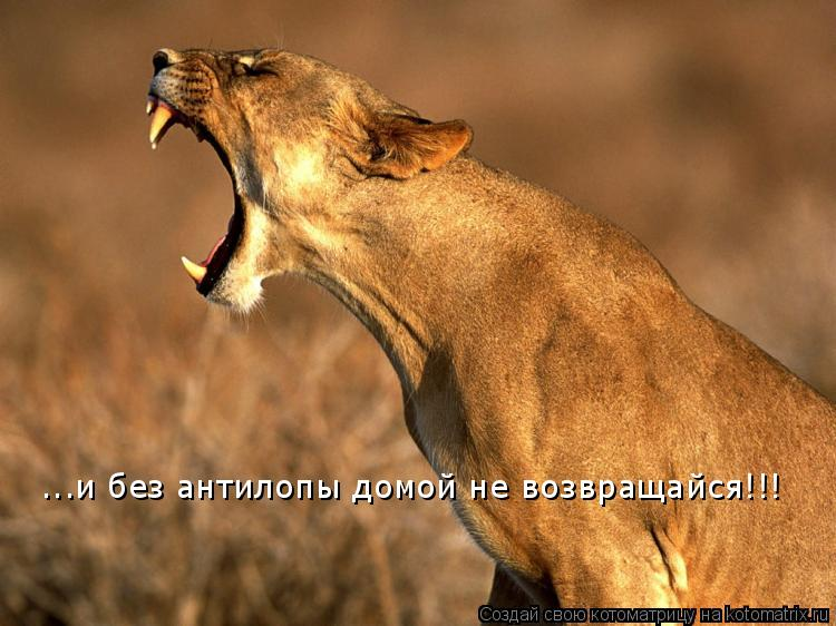 ...и без антилопы домой не возвращайся!!!