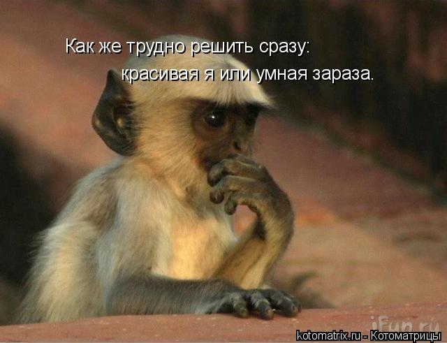 Котоматрица: Как же трудно решить сразу: красивая я или умная зараза.