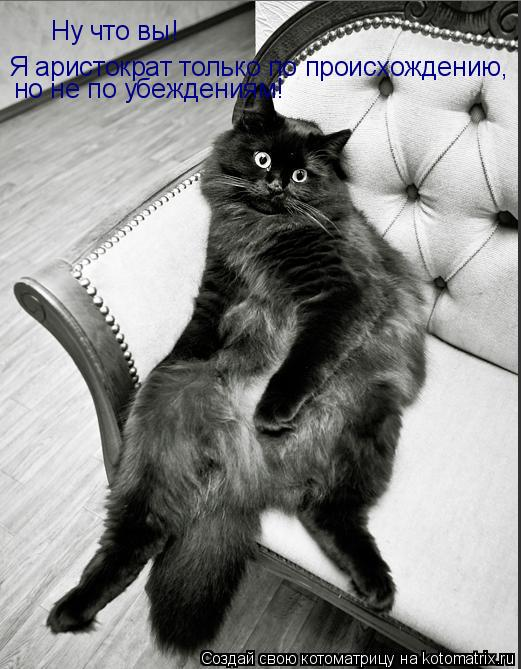 Котоматрица: Ну что вы! Я аристократ только по происхождению, но не по убеждениям!