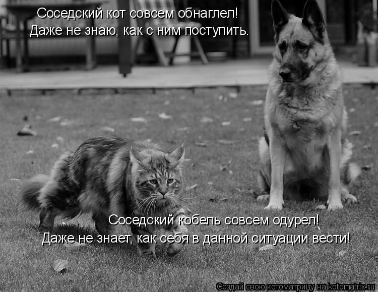 Котоматрица: Соседский кот совсем обнаглел!  Даже не знаю, как с ним поступить. Соседский кобель совсем одурел! Даже не знает, как себя в данной ситуации в