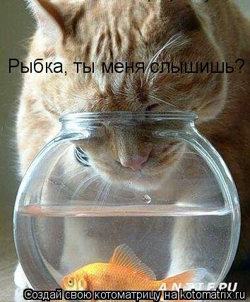 Котоматрица: Рыбка, ты меня слышишь?