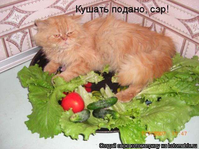 Котоматрица: Кушать подано, сэр!