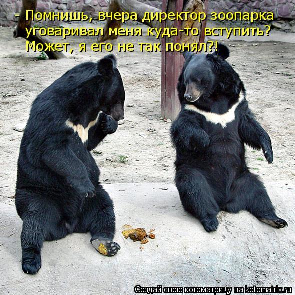 Котоматрица: - Помнишь, вчера директор зоопарка уговаривал меня куда-то вступить? Может, я его не так понял?!