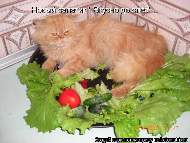 "Котоматрица: Новый салатик "" Вкусно до слёз"" ..."