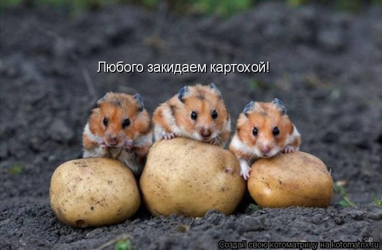 Котоматрица: Любого закидаем картохой!