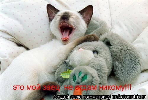 Котоматрица: это мой заец  не отдам никому!!!