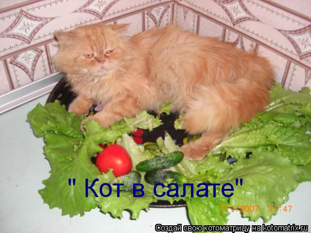 """Котоматрица: """" Кот в салате"""""""