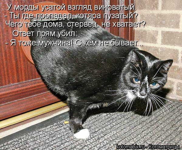 Котоматрица: У морды усатой взгляд виноватый. - Ты где пропадал, котяра пузатый? Чего тебе дома, стервец. не хватает? Ответ прям убил:  - Я тоже мужчина! С ке