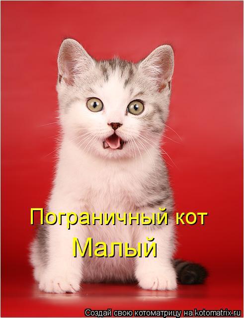 Котоматрица: Пограничный кот  Малый