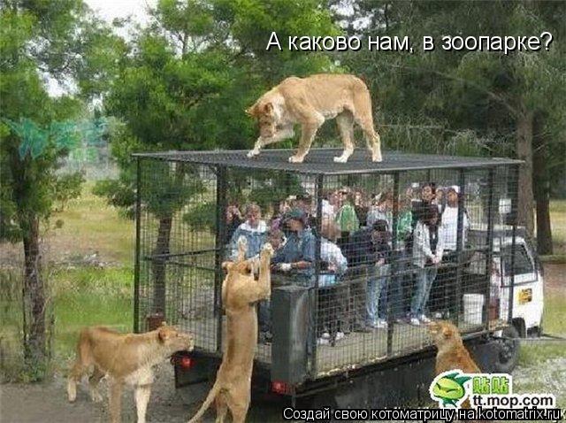 Котоматрица: А каково нам, в зоопарке?
