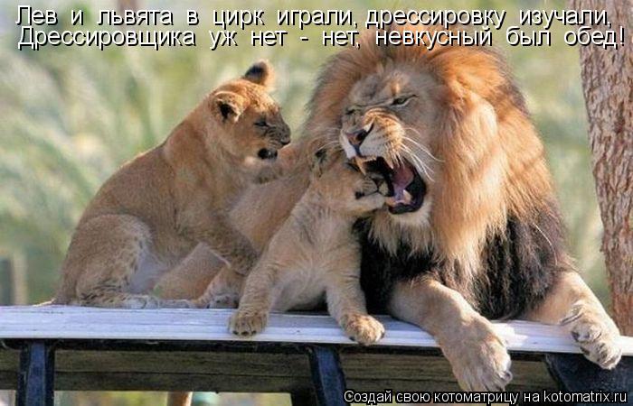 Котоматрица: Лев  и  львята  в  цирк  играли, дрессировку  изучали, Дрессировщика  уж  нет  -  нет,  невкусный  был  обед!