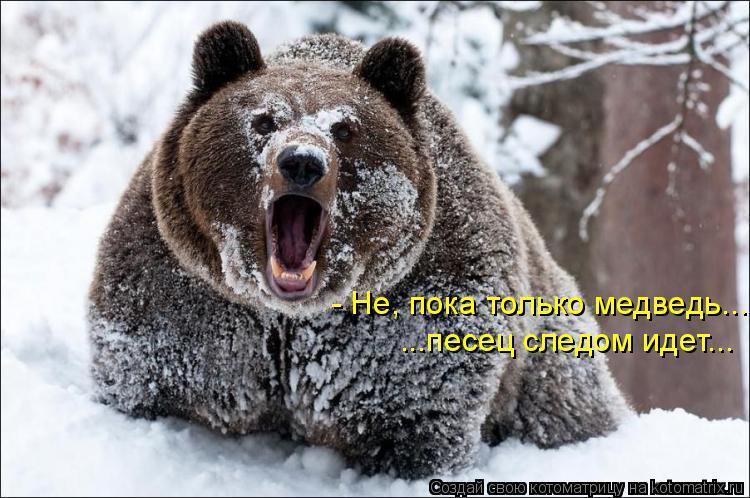 Котоматрица: - Не, пока только медведь... ...песец следом идет...