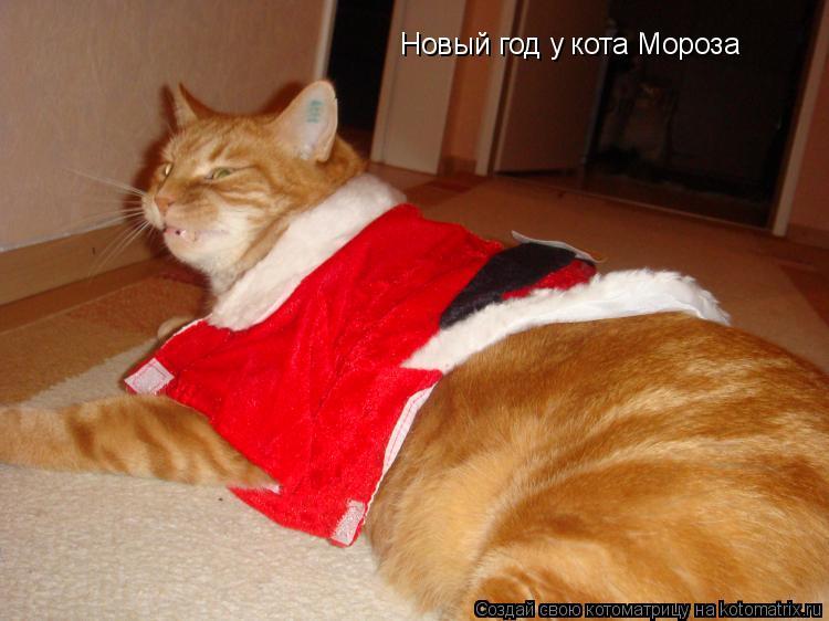 Котоматрица: Новый год у кота Мороза