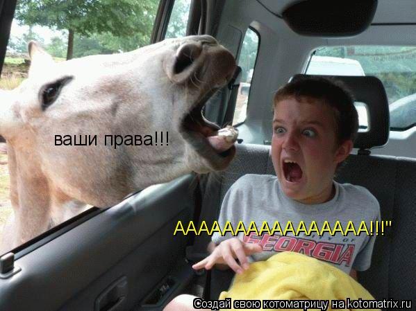 "Котоматрица: ваши права!!! АААААААААААААААА!!!"""