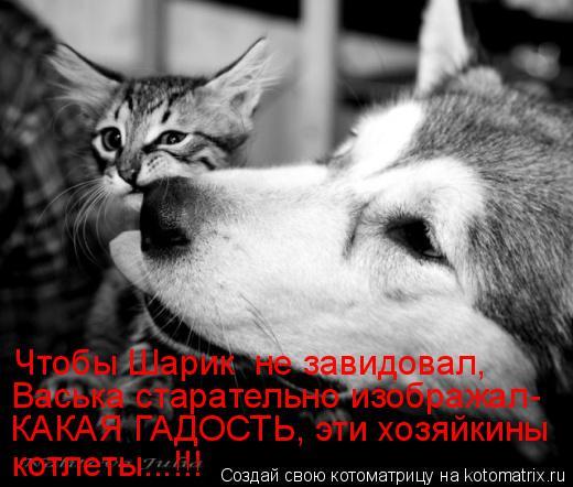 Котоматрица: Чтобы Шарик  не завидовал, Васька старательно изображал- КАКАЯ ГАДОСТЬ, эти хозяйкины  котлеты...!!!
