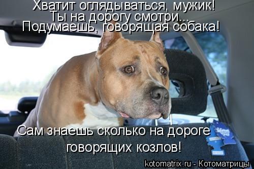 Котоматрица: Хватит оглядываться, мужик!  Ты на дорогу смотри... Подумаешь, говорящая собака!  Сам знаешь сколько на дороге  говорящих козлов!