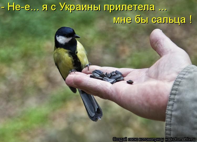 Котоматрица - - Не-е... я с Украины прилетела ... мне бы сальца !