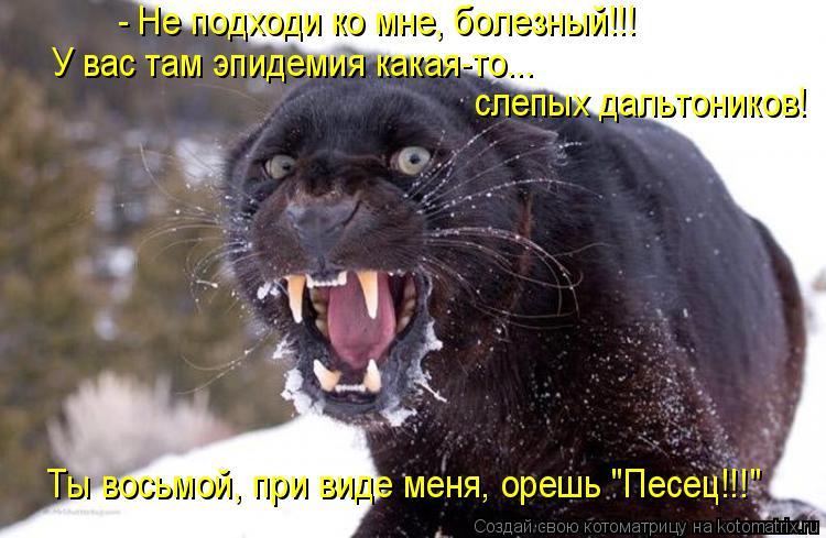 """Котоматрица: - Не подходи ко мне, болезный!!! слепых дальтоников! У вас там эпидемия какая-то... Ты восьмой, при виде меня, орешь """"Песец!!!"""""""