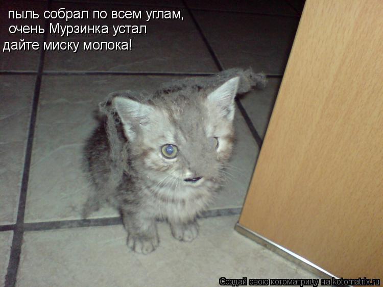 Котоматрица: пыль собрал по всем углам, очень Мурзинка устал дайте миску молока!