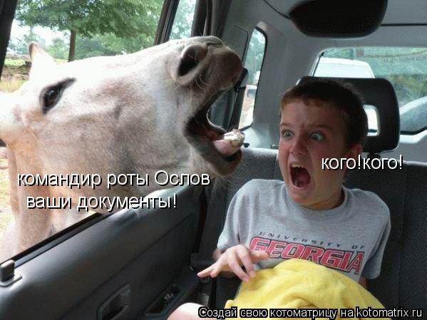Котоматрица: командир роты Ослов ваши документы! кого!кого!