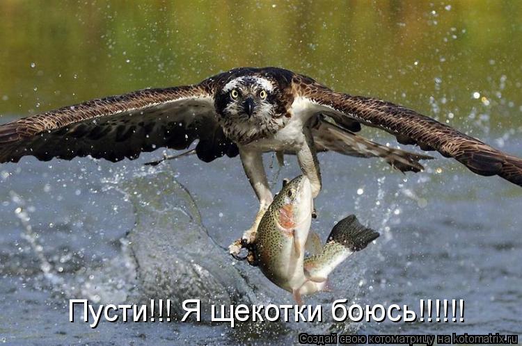 Котоматрица: Пусти!!! Я щекотки боюсь!!!!!!