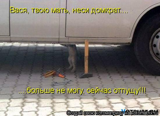 Котоматрица: Вася, твою мать, неси домкрат.... ....больше не могу, сейчас отпущу!!!