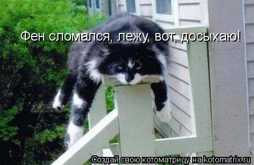 Котоматрица: Фен сломался, лежу, вот, досыхаю!