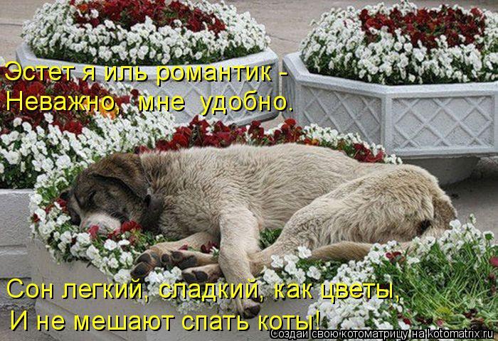 Котоматрица: Сон легкий, сладкий, как цветы, И не мешают спать коты! Эстет я иль романтик -  Неважно,  мне  удобно.