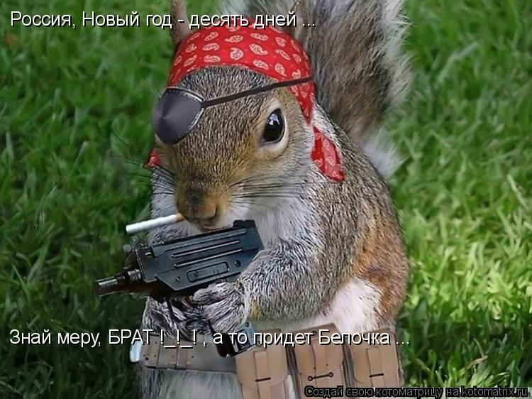 Котоматрица: Россия, Новый год - десять дней ... Знай меру, БРАТ !_!_! , а то придет Белочка ...