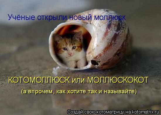 Котоматрица: Учёные открыли новый моллюск КОТОМОЛЛЮСК или МОЛЛЮСКОКОТ (а впрочем, как хотите так и называйте)