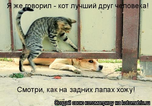 Котоматрица: Я же говорил - кот лучший друг человека! Смотри, как на задних лапах хожу!